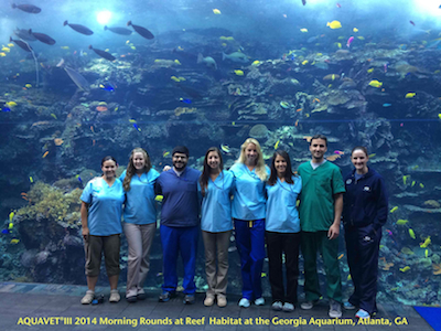 Morning rounds at GA aquarium