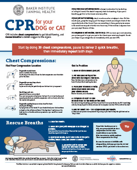 Pet CPR infographic