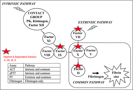 Intrinsic and Extrinsic Pathways Diagram