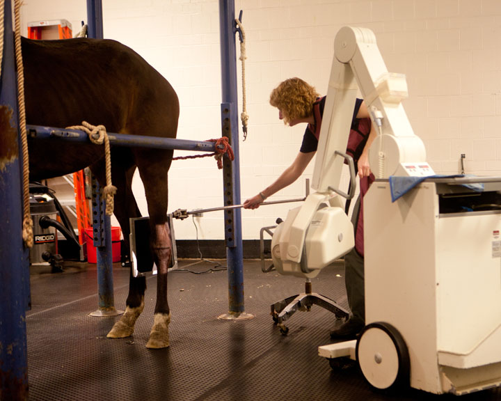Technician taking a radiograph of a horses leg