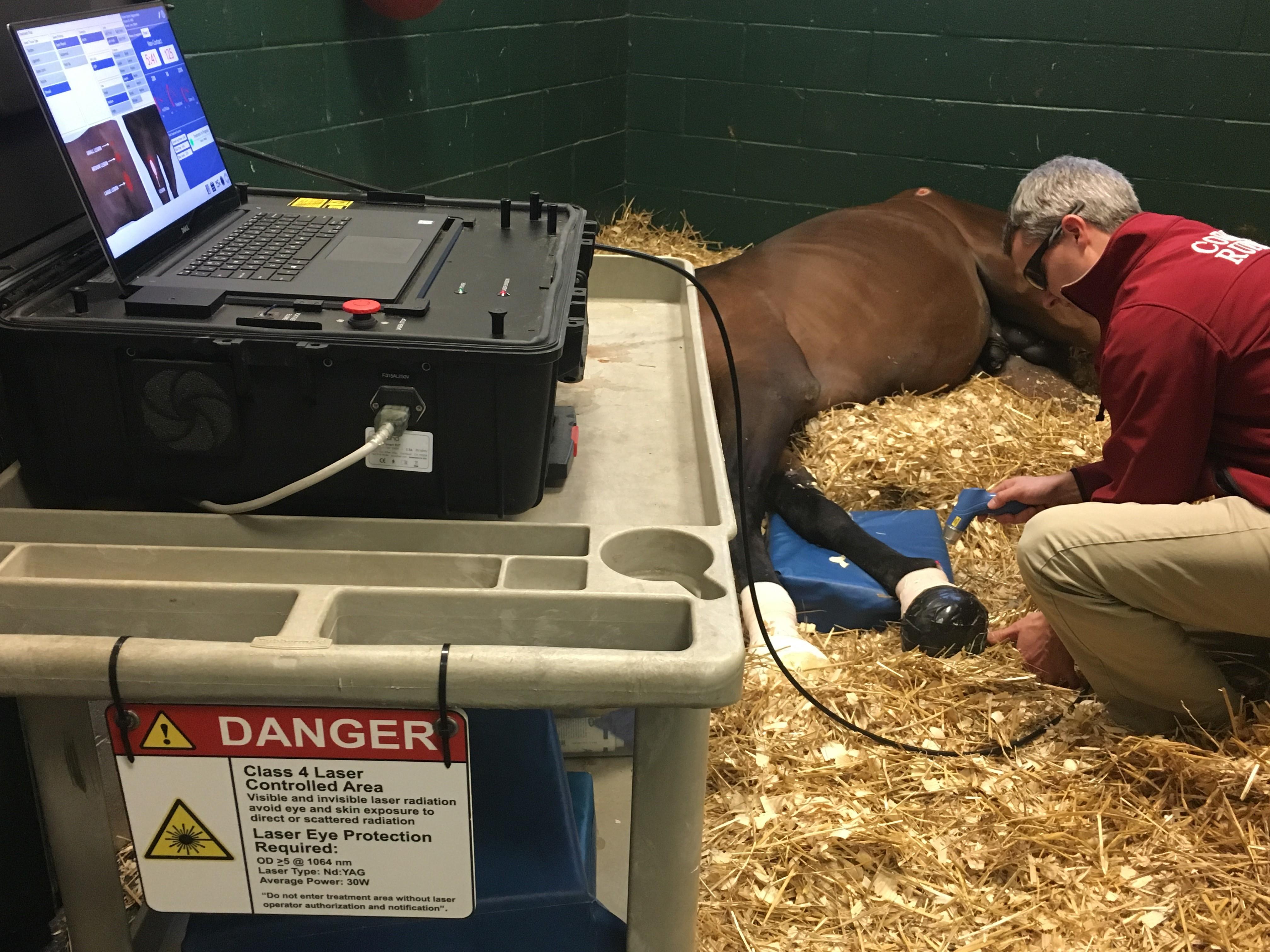 Dr. John Pigott performs regenerative laser therapy on a recumbant horse.