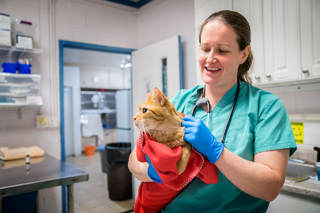 Cornell veterinarian at the SPCA with a cat