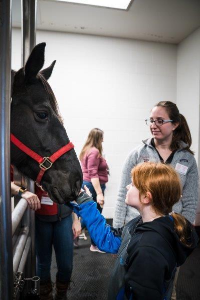 A tour guest pets the pregnant mare.