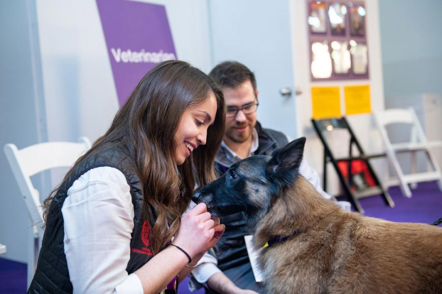 A student greets a dog at Westminster