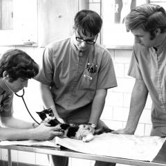 Circa mid 1980, third year students perform a routine exam on a cat.