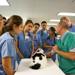 Dr. Brian Collins teaching students during the first year cat lab, 2015