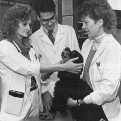 Dr. Patricia Tamke performs a physical exam on a dog with students observing in 1987.