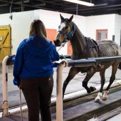 Horse on the treadmill