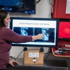 Dr. Mariana Diel de Amorim explains the ultrasound images of the foal.