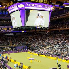A indoor stadium shot of the crowd at Madison Square Garden