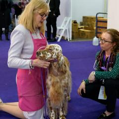 A student crouches next to an English setter and its owner at Westminster