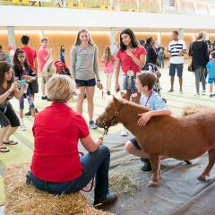 Minnie the miniature horse greets visitors to Reunion 2018