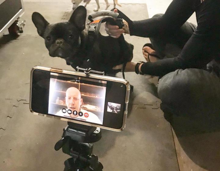 Dr. Frye works with dog via telemedicine