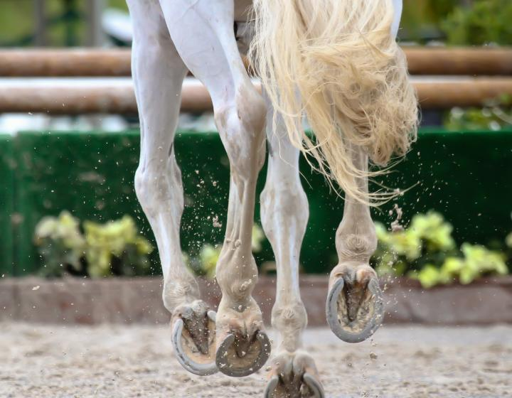 a galloping horse's hooves