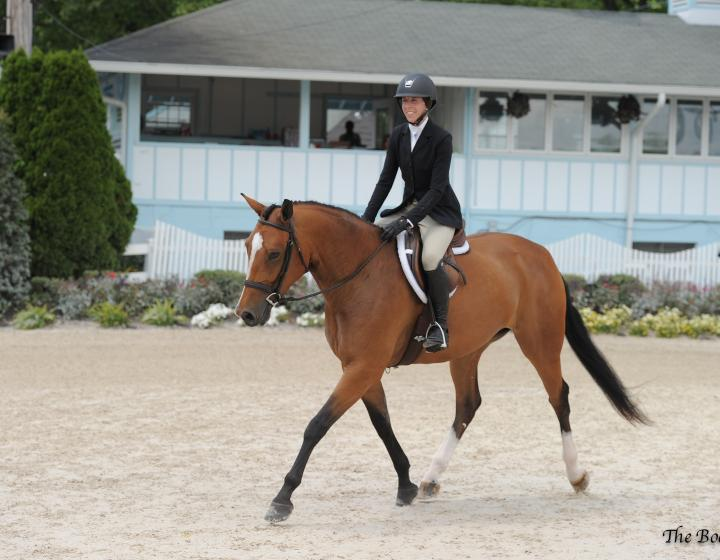 Horse being shown by a rider