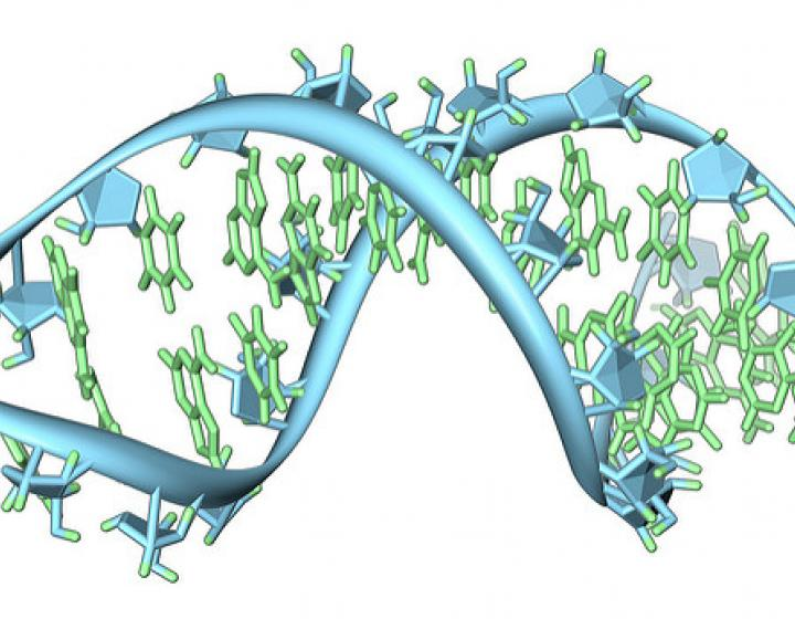 artists illustration of an RNA