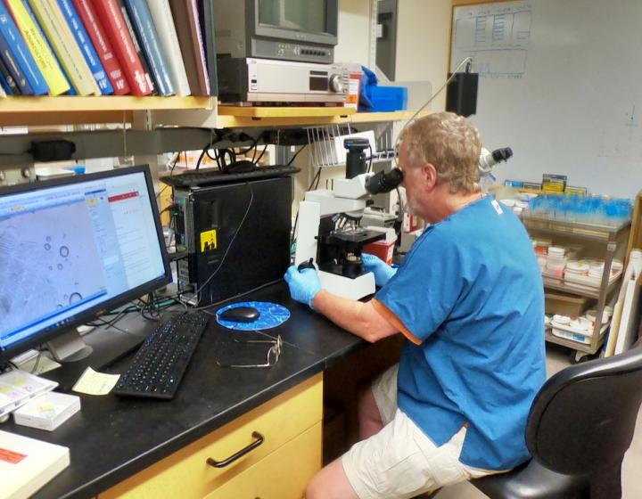 Rod Getchell at a microscope with the Aquatic Animal Health Program