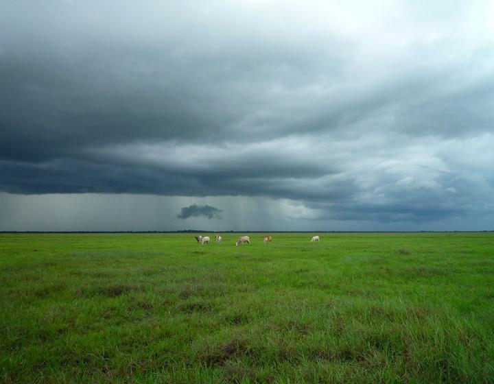 A grassy field under a stormy sky