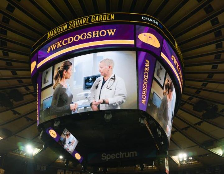 CUVS on jumbotron at Madison Square Garden