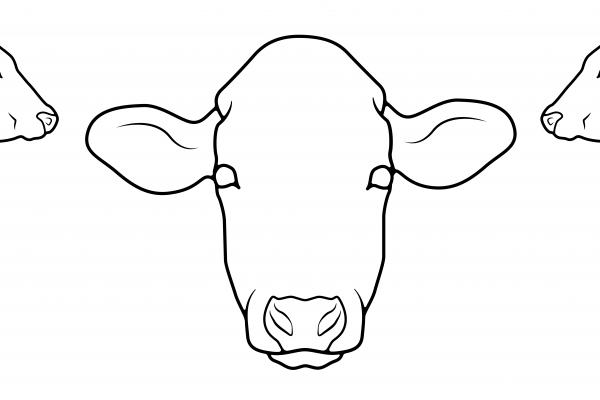 bovine body map illustration