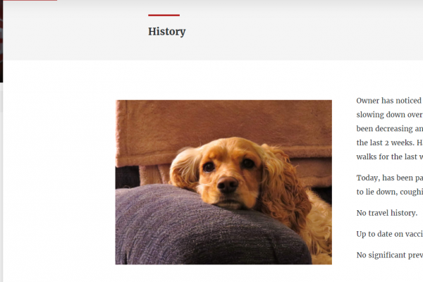 history section of online case