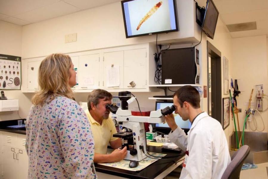 Dermatology veterinarian and student looking through a microscope at a slide, image is projected on screen on the wall.