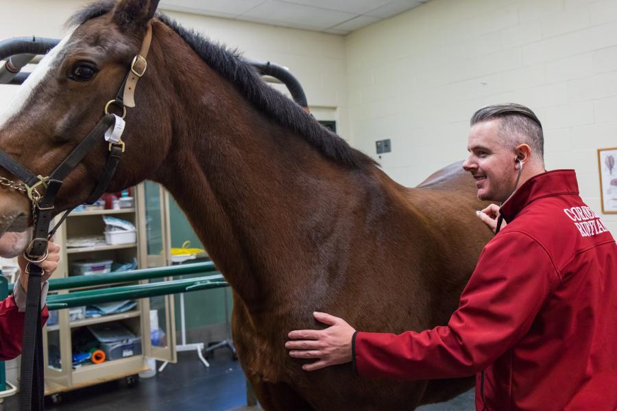 Dr. Sam Hurcombe listens to a horse with his stethoscope