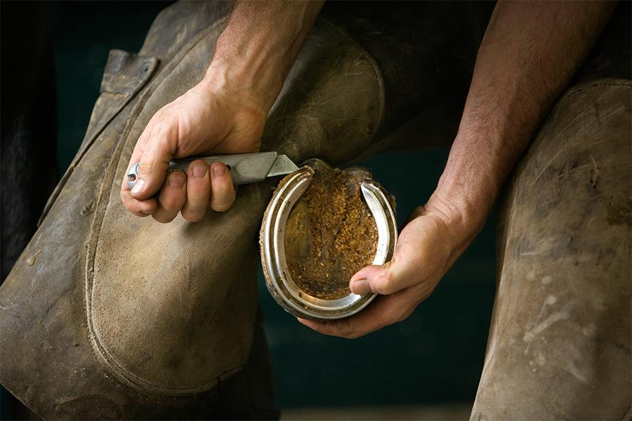 a farriers hands hold a horses hoof to remove a horse shoe.