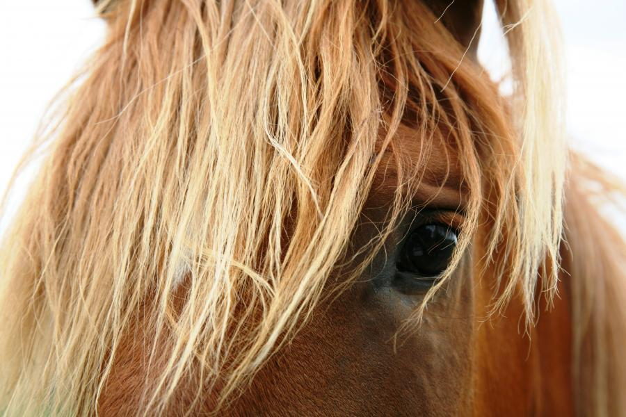 close up of a horse's left eye