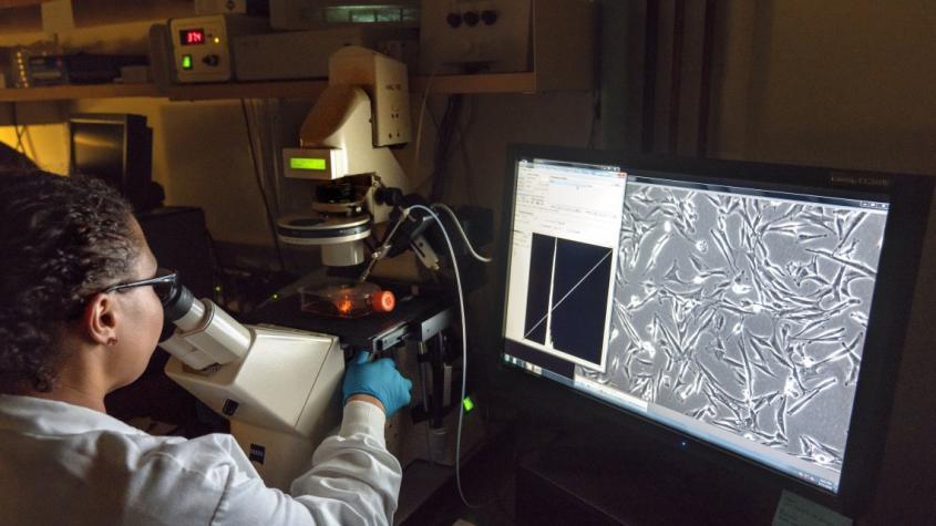 Researchers in professor Gary Whittaker's lab