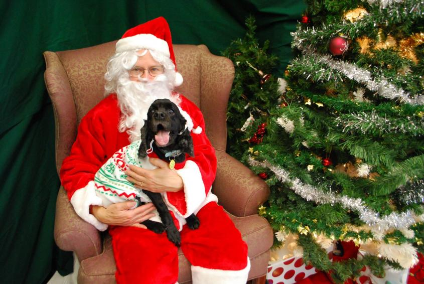 Santa Claus and a dog pose for a photo