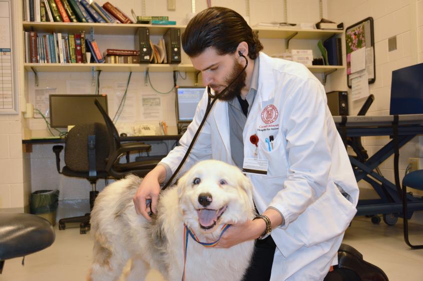 Lymphoma patient and vet