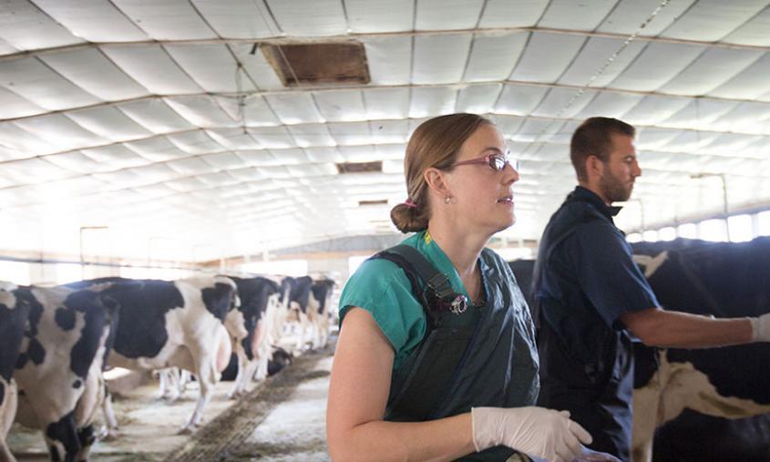 Dr. Jessica McArt at a dairy farm