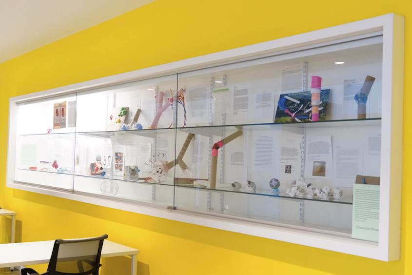 A display case with anatomy models at CVM