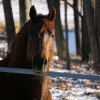 A horse standing at a fence