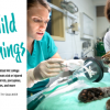 Veterinarians work on an injured bobcat