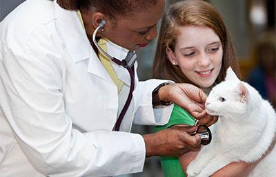 Feline Vaccines: Benefits and Risks | Cornell University
