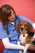 Vet with Beagle