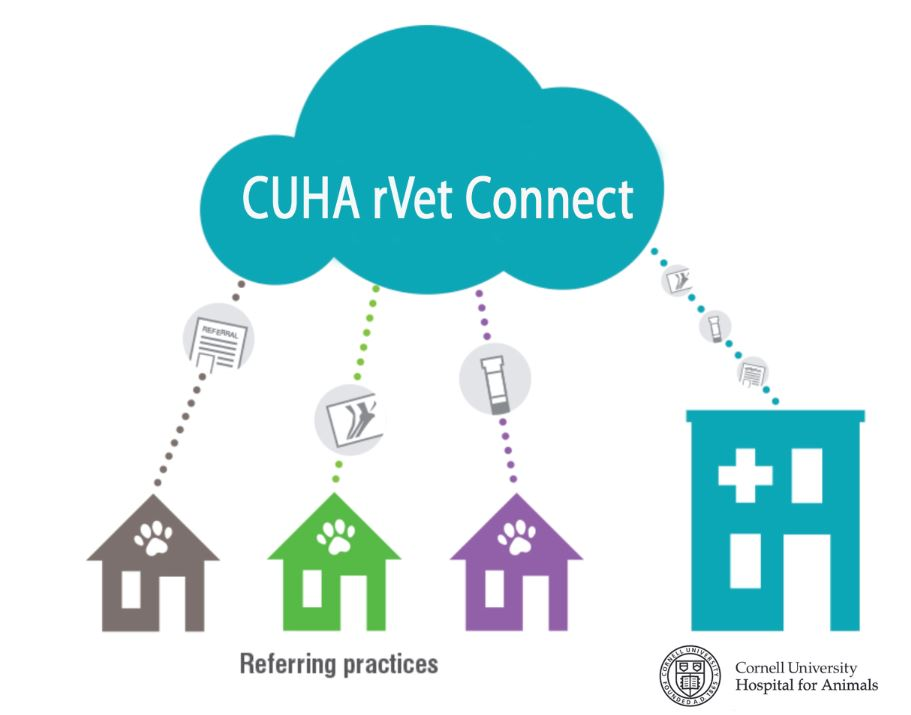 Help with CUHA rVet Connect Portal